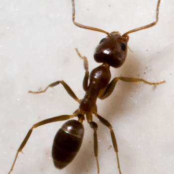 How to get rid of ants!