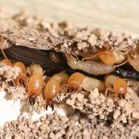 How to get rid of Termites!