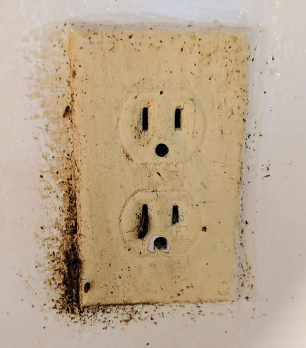 Fecal spotting and cockroaches living in an electrical outlet.