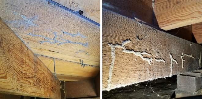 Get Rid Of Termites Omega Termite Pest Control